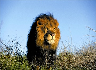 Afroventures Tours & Safaris Johannesburg