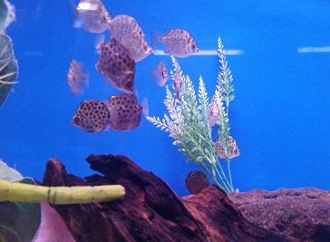 Aquarium Centre Johannesburg
